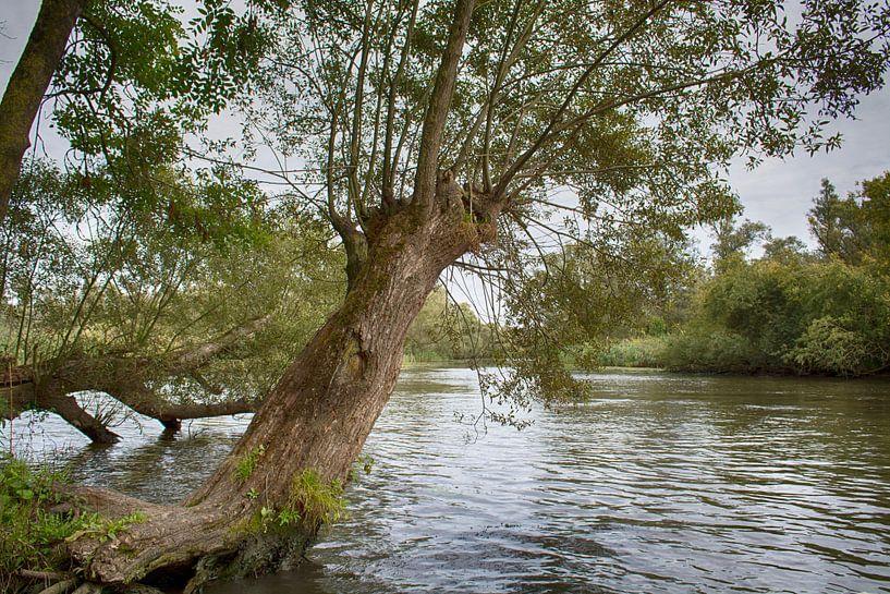 In de Biesbosch van FotoGraaG Hanneke