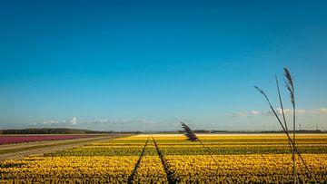 Wijds uitzicht over een bollenveld in de Noordoostpolder van Gerrit Veldman