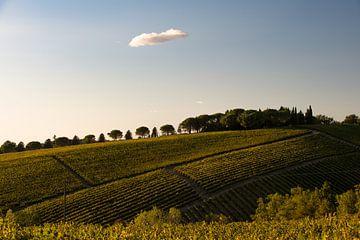 Wijngaard in Toscane von Wim Slootweg