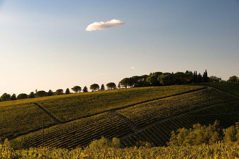 Wijngaard in Toscane van Wim Slootweg