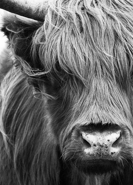 Schotse Hooglander portret zwart-wit van Marjolein van Middelkoop