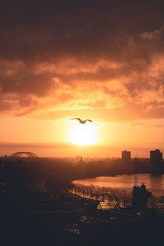 Vogelvlucht in Rotterdam van Joey van Embden