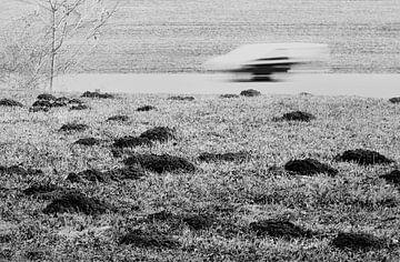Slow vs Fast von Jacques Vledder