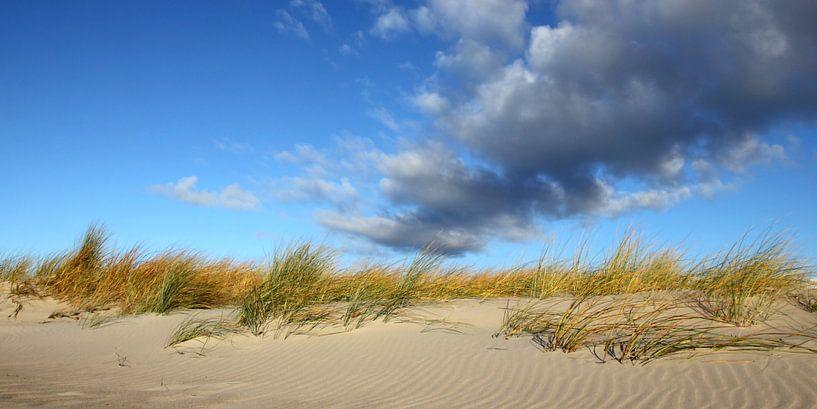 Dünenpanorama van Ostsee Bilder