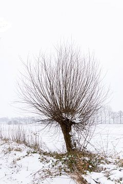Pollerweide im Schnee, Winterlandschaft von Lieke van Grinsven van Aarle