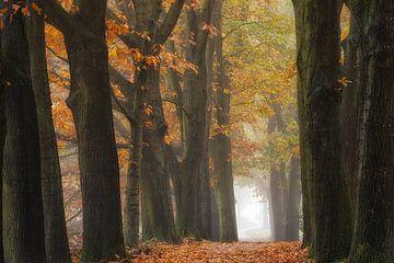 Bomenrij met herfstkleuren  van Jenco van Zalk