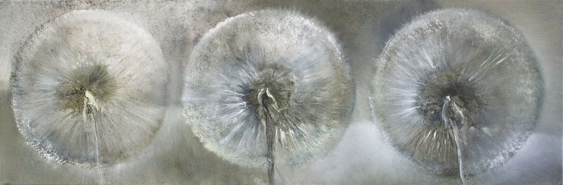 Drei Pusteblumen im weißen Licht von Annette Schmucker