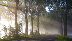 Strijklicht langs de bomen