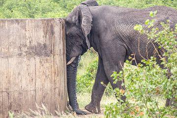 Elefant ruht gegen Brunnen, kruger park südafrika von Marijke Arends-Meiring