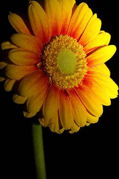 Blume von Orhan Sahin