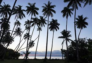 Palmen op tropisch eiland in Fiji