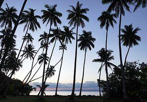 Palmen op tropisch eiland in Fiji van