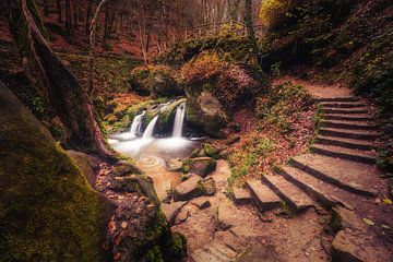 Scalum stantem naturae  van Joris Pannemans - Loris Photography