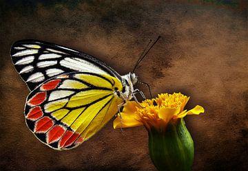 De wereld van een vlinder von Bert Hooijer