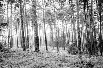 Door het bos sur Karsten van Herwaarden