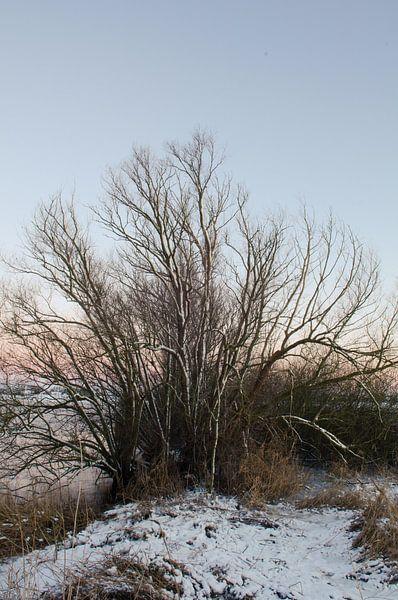 Winter van Paul de Vos