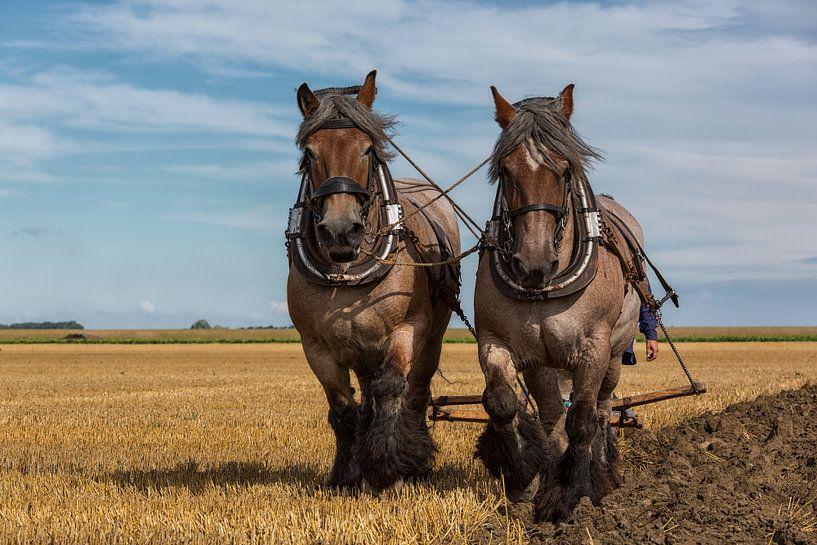 Paarden krachten van Bram van Broekhoven