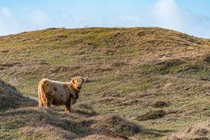 Hooglander bollenkamer Texel