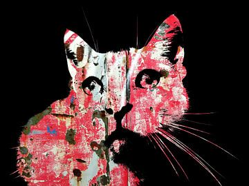 Kattenkunst - Indy 4 van