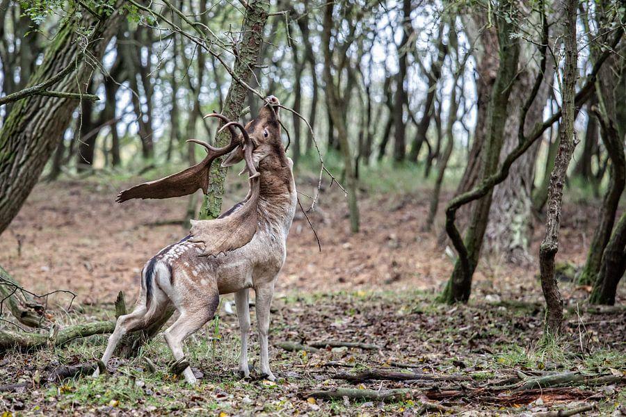 Deer van Wessel Krul
