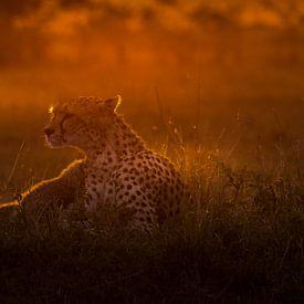 Sunrise at Masai Mara! van Robert Kok
