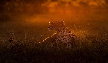 Sunrise at Masai Mara!