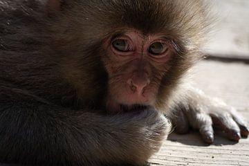 Japanischer Baby Affe (Makake) von Mylène Amoureus