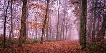 Bospad in de mist van Marcel Pietersen