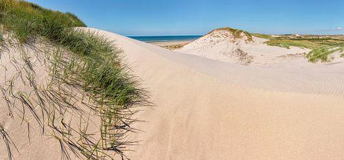 Duinen in Het Noordhollands Duinreservaat, strand en de Noordzee, Bergen aan Zee, , Noord-Holland van