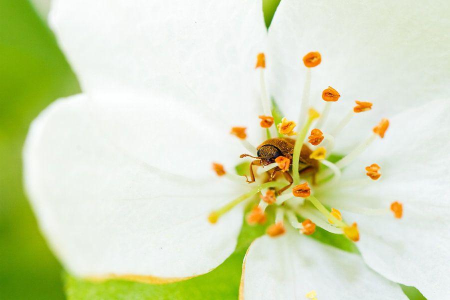Fleurig kevertje