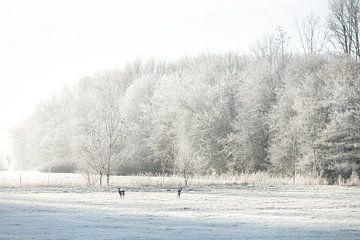 Reetjes in een winters landschap van P Kuipers