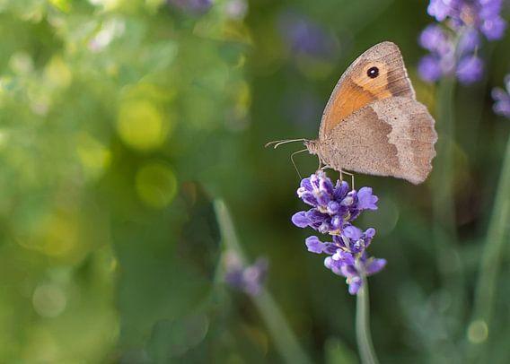 Vlinder en lavendel van Christa Thieme-Krus