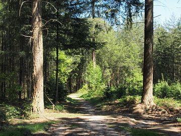 Lichtspel door zon op bospad van Annie Lausberg-Pater