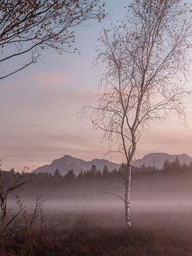 Nebel im Moor von Thomas Weber