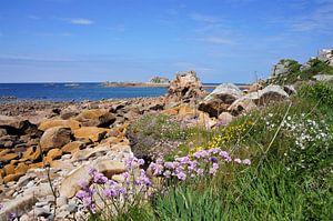 Bloemen aan de roze granietkust van Bretagne Frankrijk van
