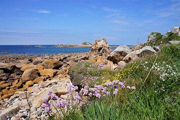 Blumen auf der rosa Granit Küste von Brittany France von