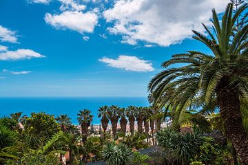 Blick auf Palmen in Funchal auf der Insel Madeira von Rico Ködder