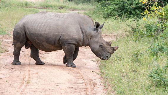 een witte neushoorn van dichtbij tijdens een safari