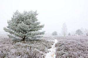 Frozen Heath - Another Version
