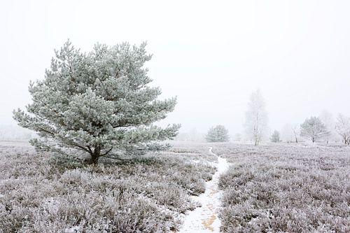 Frozen Heath - Another Version van Gisela Scheffbuch