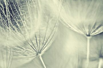 Gele Morgenster pluis van Ellen Driesse