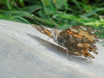 Vlinder met gebroken vleugels van Lin McQueen