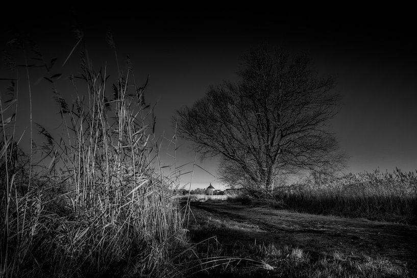 Between reed and tree van Ruud Peters
