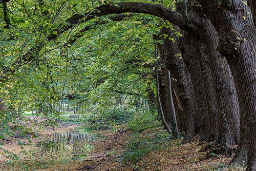 Arbres d'automne courbés