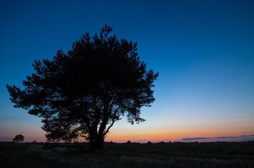 Sunset Tree van Jeroen Hagedoorn