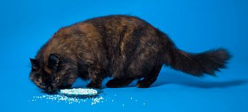 Kat en muisjes. van Hennnie Keeris