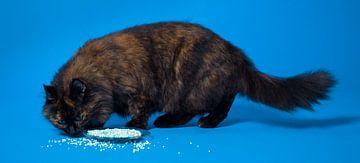Kat en muisjes. sur Hennnie Keeris