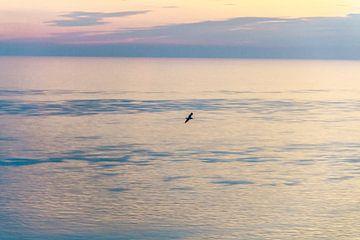 Ansicht aus der Vogelperspektive von Diane Cruysberghs