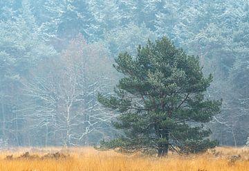Winterlandschaft in den Niederlanden von Jos Pannekoek