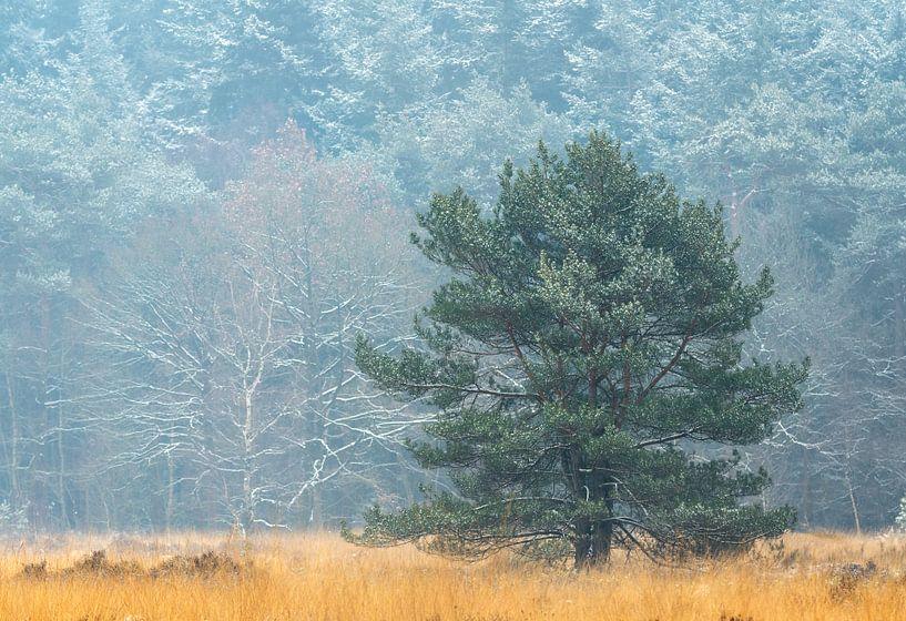 Winterlandscape aux Pays-Bas sur Jos Pannekoek